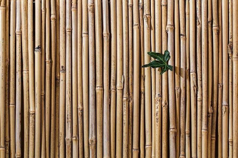 ¿Cómo evitar que el bambú invada el jardín?