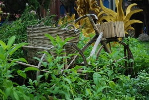 BENEFICIOS Y USOS DEL BAMBÚ: LA PLANTA MÁS ECOLÓGICA